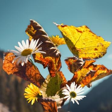 """Spätsommer und Herbstanfang"""